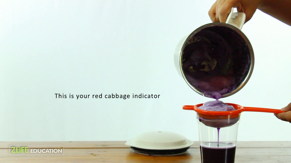 Natural Indicator - Red Cabbage 7